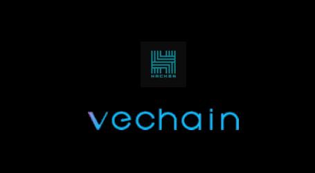 VeChain launches bug bounty program on HackenProof